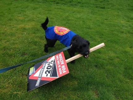Dog on the picket line